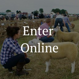Enter-Sheep-Classes-Online