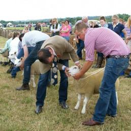 Sheep-Classes
